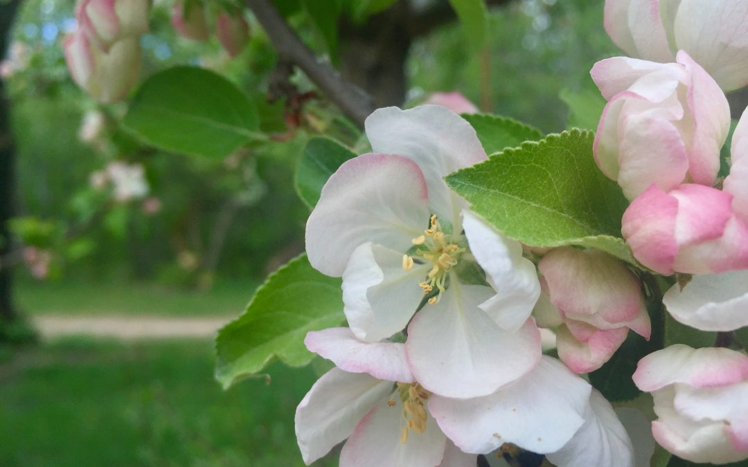 Five tips to help you get the most from spring